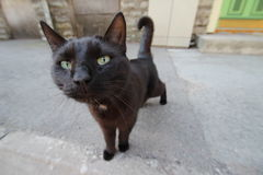 Curious black cat. A stray black cat I met on the street stock photos
