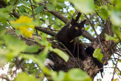 Curious black cat on the tree. Curious black cat with yellow eyes on the tree royalty free stock photos