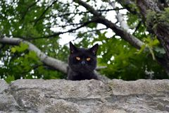 Curious black cat with yellow eyes.  royalty free stock photos