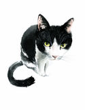 Curious black watercolor cat on white background Stock Photo