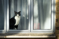 Curious black and white cat sitting on window and looking at city street Stock Photos