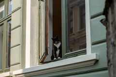 A curious black and white cat on a window sill in Bergen - 2. A curious black and white cat on a window sill in Bergen stock photos