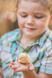 Curious Boy With Yellow Chick Stock Images