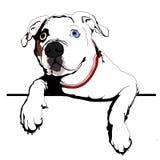 Curious bulldog Royalty Free Stock Photos
