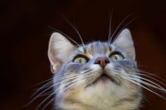 Curious cat. Portrait of curious cat 1 stock photography