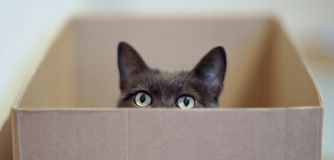 A curious cat. A very curious cat in a carton Royalty Free Stock Photography