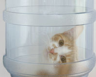 Curious cat. In the office water cooler royalty free stock photos
