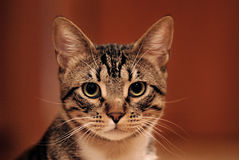 Curious Cat. Focuses on the lens stock images