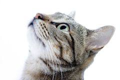 Curious cat. Small young curious darkly shade eager cat royalty free stock photo