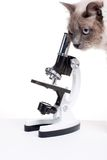 Curious cat. Smart cat looking to microscope with research kit contents around over white paper background Royalty Free Stock Photo