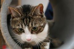 Curious cat Stock Photo