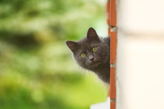 Curious cat Royalty Free Stock Images