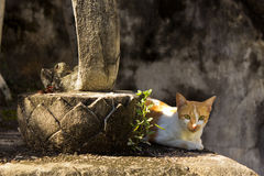 Curious Cat. Cat Curiously Looks at the Photographer Royalty Free Stock Photography