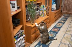Curious cat. Explore chrysanthemum leaf Stock Photos