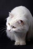 Curious cat. Stock Photos