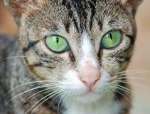 Free Curious Cat Stock Image - 7805141