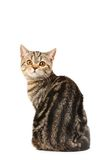 Curious cat Stock Images