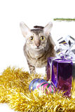 Curious cat as a Christmas gift Royalty Free Stock Image