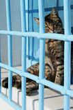 Curious cat behind bars on windowsill Stock Images