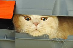 Curious cat in  box Stock Photos