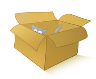 Curious cat in a carton box Stock Photography