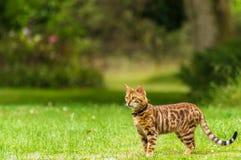 Curious cat chasing a bird stock photos
