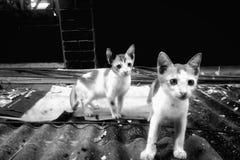 Curious cat. Pet animal petlover meow royalty free stock photo