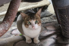 Curious cat. A cute intimidated cat curiously looking at the camera Royalty Free Stock Image