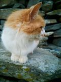 The curious cat. Cute curious looking cat on a warm sunny day in the garden royalty free stock photo