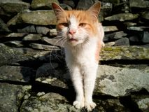 The curious cat. Cute curious looking cat on a warm sunny day in the garden royalty free stock images