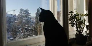 Curious cat. Dav curious cat blackcat windows stock images