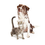 Curious Cat and Dog Looking Up Royalty Free Stock Photography