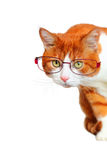 Curious Cat with Glasses Peeping Side. And looking at the camera on white background stock photography