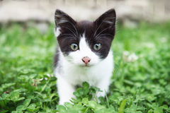 Curious Cat. In the grass royalty free stock photography