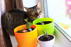 Curious cat and house plants Stock Image