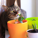 Curious cat and house plants Royalty Free Stock Photos