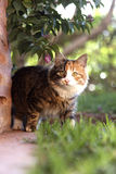 Curious cat. Hunting curious cat in the garden royalty free stock photography