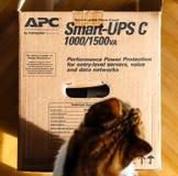 Curious cat inspecting APC Smart-UPS battery. PARIS, FRANCE - MAR 29, 2018: Above view of curious cat inspecting APC Smart-UPS C 1000VA LCD 230V enterprise-level Royalty Free Stock Images