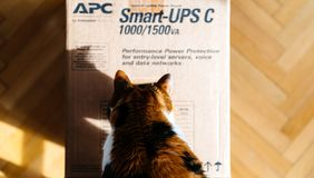 Curious cat inspecting APC Smart-UPS battery. PARIS, FRANCE - MAR 29, 2018: View from above of curious cat inspecting APC Smart-UPS C 1000VA LCD 230V enterprise Royalty Free Stock Image