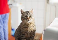 Curious cat in the kitchen. Closeup stock photos