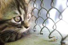 Little cute kitten close-up looks through the net to the street, locked up, curious cat royalty free stock photography