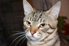 Curious cat. Look stock photography