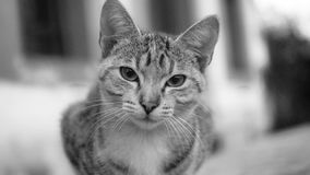 Curious cat. Looking straight at you in black and white Stock Photo