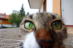 A curious cat looks straight into the camera`s lens Stock Photo