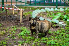 A curious cat near some house in Moscow stock photography