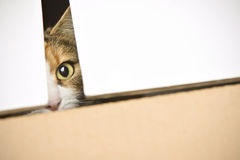 Curious cat peeking out of box. Landscape interior Stock Photos