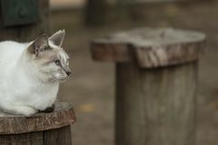 Curious cat sitted staring  and observing. Beautiful eyes.. Curious cat sitted staring Royalty Free Stock Photos