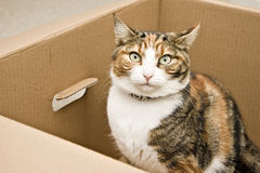 Curious cat sitting in box. Landscape interior Royalty Free Stock Photos