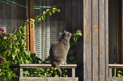 Curious cat sitting and looking at the sky Royalty Free Stock Photo