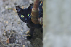 Curious cat sneaking in the backyard Stock Photography